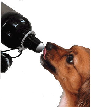 Dog_using_water_bottle